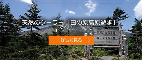 天然のクーラー「田の原高原遊歩」
